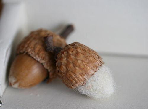 Acornwhite1