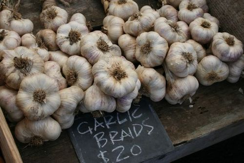 AshlandMarketGarlic