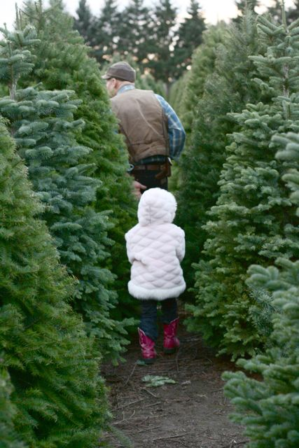 Christmas Tree 2010-2