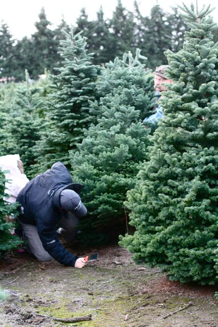 Christmas Tree 2010-5