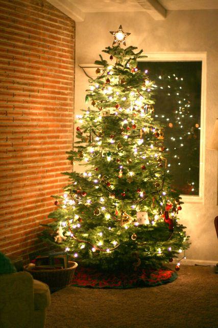 Christmas Tree 2010-6