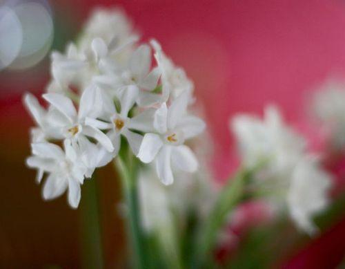 Narcisiss-3