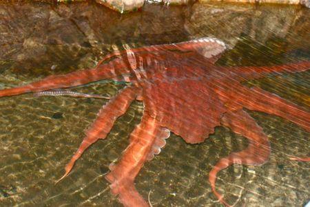 Seaside 2011--octopus--22