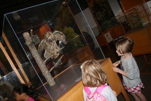 Smokies museum owl 13