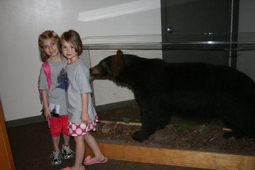 Smokies museum bear 14