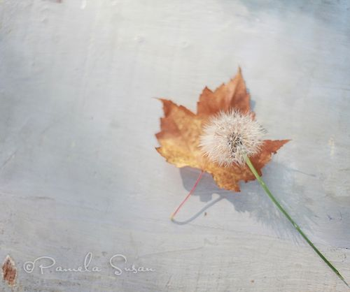 Autumn-leaves and dandelion wishes-4