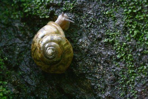 Smokies snail 6