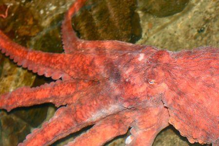 Seaside 2011--octopus--20