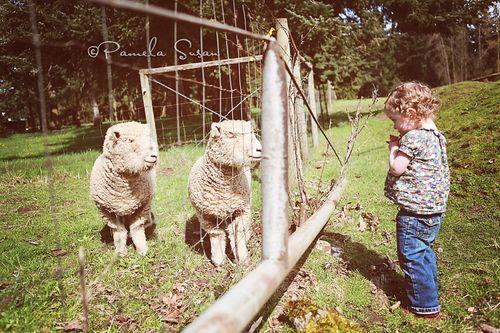 Papa-farm-J-sheep