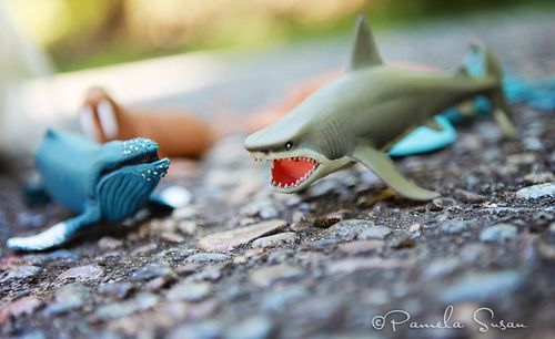 Summer-aquatic-animals-shark