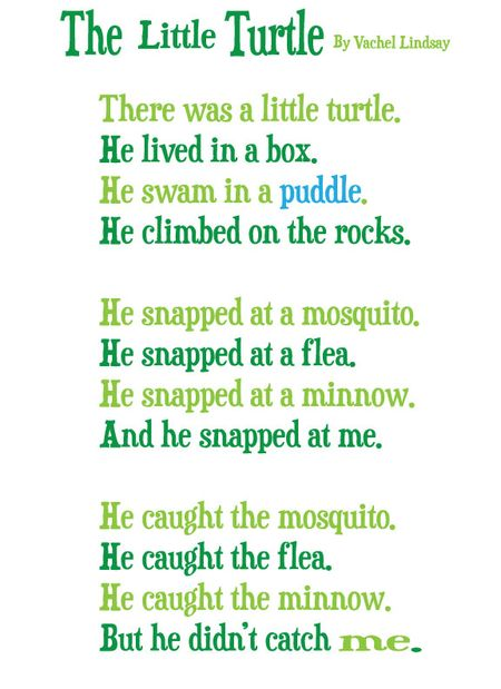 The-little-turtle