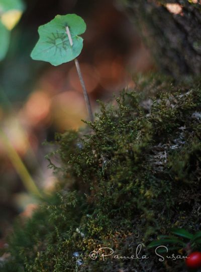 Fairy-house-forest-4