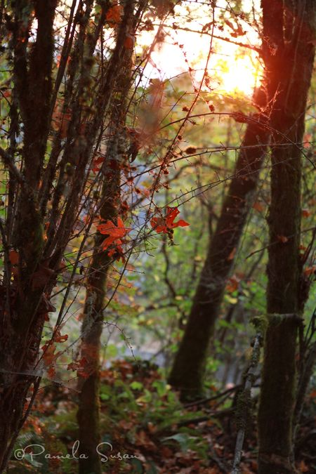 Fairy-forest-sunset
