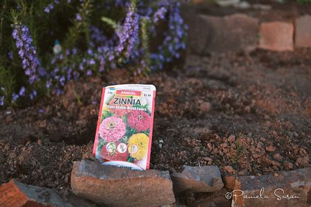 Earth-day-zinnias-1