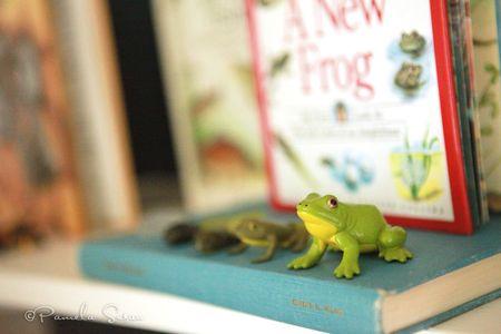Playroom-frog-model-life-cycle-16