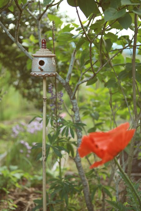Backyard-poppy-fairy-house-6