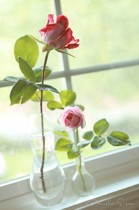Roses-in-window-sill-pamela-susan