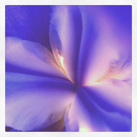 Iris-pamela-susan-2