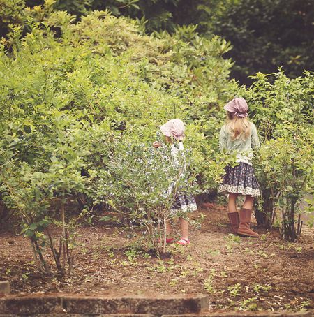 4th-of-july-picking-blueberries-2