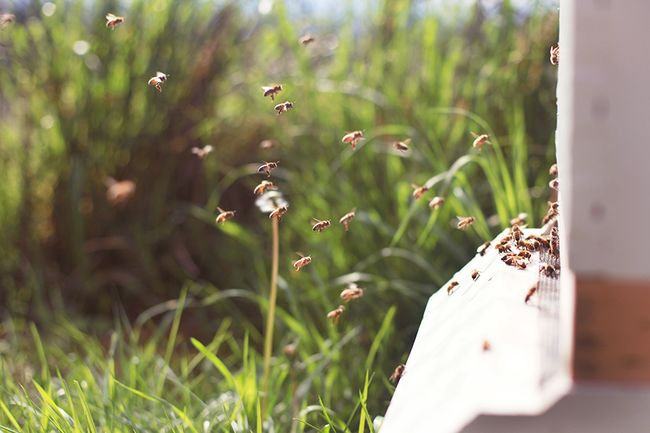 BEES-march-2015